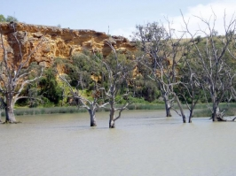 Murray River_8